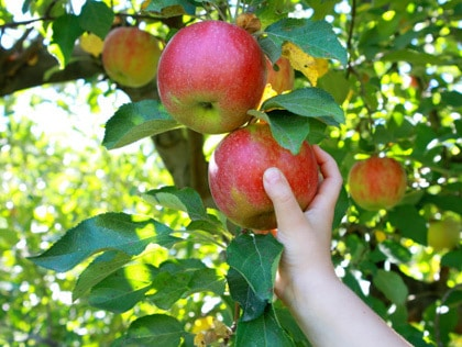 applepicking - Mbrace - Blog